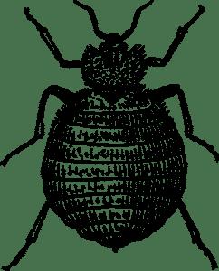 Élősködők a lakásban: Ágyi poloska