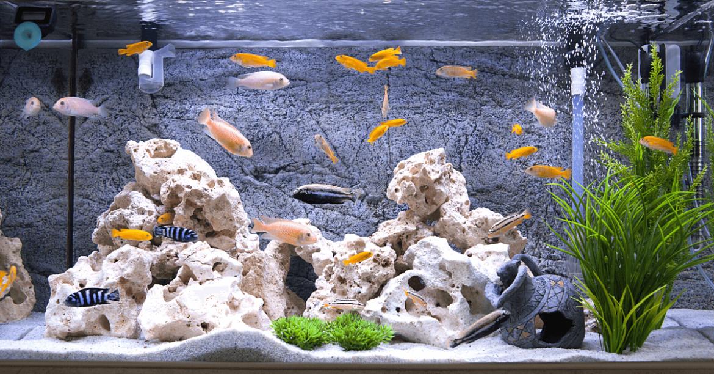 akvárium telepítés