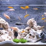 Akvárium telepítés: mire lesz szükségünk?