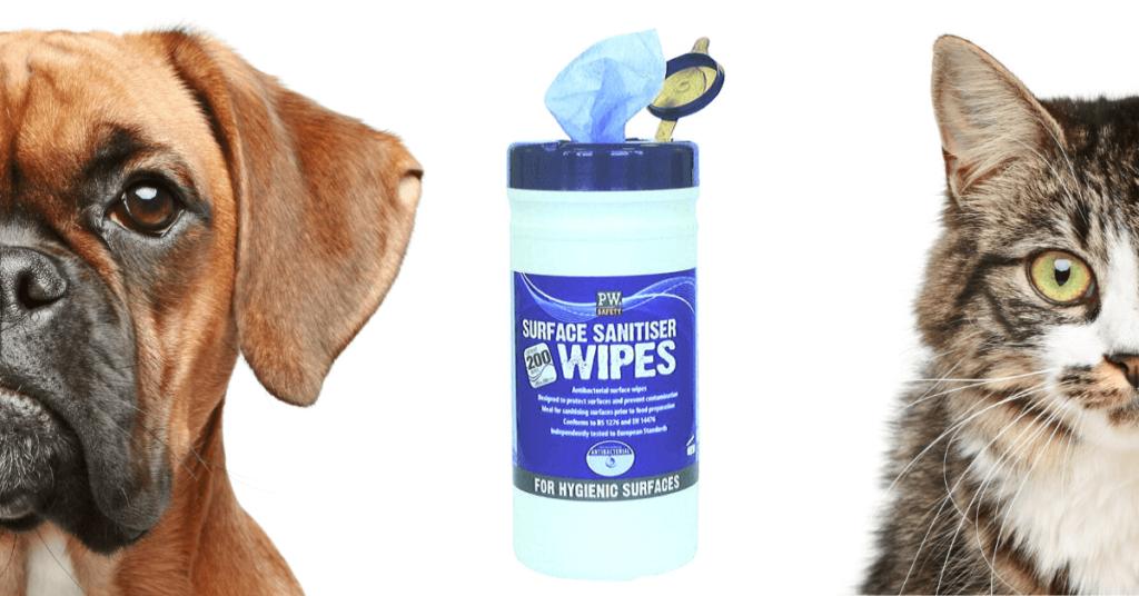 Praktikus ötletek házikedvencekhez, antibakteriális törlőkendő nagyon hasznos lehet.