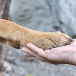 Nálatok laknak-e állatok? Praktikus ötletek házikedvencekhez
