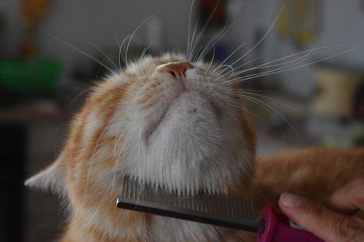 Takarítás és háziállat: fésüld ki kedvenced bundáját a lehető legtöbbször, hogy elkerüld a túlzott szőrhullatást